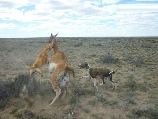 fauna silvestre atacada